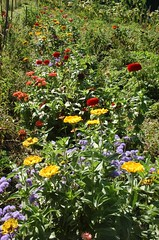 "Flowers at Delano Garden <a style=""margin-left:10px; font-size:0.8em;"" href=""http://www.flickr.com/photos/91915217@N00/12450061265/"" target=""_blank"">@flickr</a>"