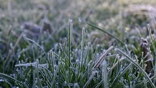 Frost in the garden #5