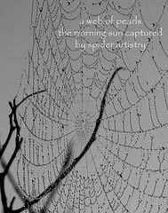 web of pearls (Wanda Amos@Old Bar) Tags: mist mono haiku web poetryandpicturesinternational wandaamos
