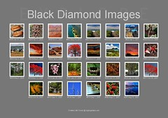 Black Diamond Images Explore Images 29th March 2014 - Big Huge Labs (Black Diamond Images) Tags: collage fdsflickrtoys flickr australia explore bdi bighugelabs blackdiamondimages 2932014