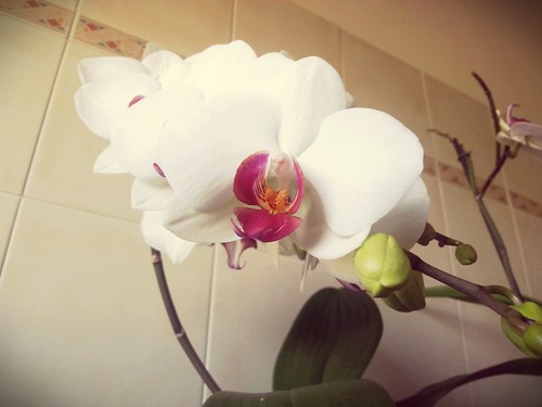 Orchidee in bagno