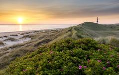 Ellenbogen (PhiiiiiiiL) Tags: sea sun lighthouse flower beach strand sunrise germany deutschland spring nikon day cloudy dunes north hard blumen list 09 northsea sylt sonne nordsee sonnenaufgang hitech leuchtturm schleswigholstein frhling dnen wattenmeer ellenbogen singleraw d800e