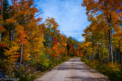 Fall Color (tom boggs) Tags: fall color medicine bow national forest wyoming
