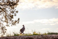 National Arborteum Sunrise-27 (Quick Shot Photos) Tags: act australia canberra canon floriade nsw theresa molonglovalley australiancapitalterritory au