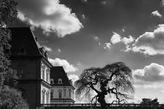 Torino - Castello del Valentino (bluestardrop - Andrea Mucelli) Tags: torino turin castellodelvalentino castle bn bw biancoenero blackandwhite