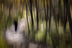 The Redhead Blends In (Edmonton Ken) Tags: vertical pan fall redhead path trees grass green yellow red