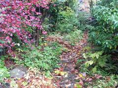 Path of leaves (Safia girl) Tags: path leaves fallcolour