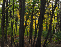 Through The Forest (jeffcbowen) Tags: highpark toronto fall