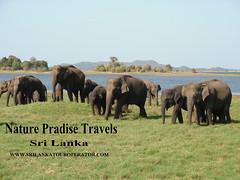 sri lanka tour operator (www.srilankatouroperator.com) Tags: safari srilanka tours operators whalewatching srilankatouroperators touroperatorsinsrilanka