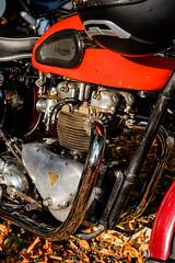 1956 Triumph 6T Thunderbird (The Adventurous Eye) Tags: 1956 triumph 6t thunderbird brnosobice 2016 hill climb race rallye classic veteran veternsk zvod do vrchu klasici