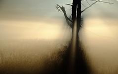 Alien (stevestreet) Tags: chobhamcommon nationalnaturereserve tree alien autumn fall colour mist misty backlit backlighting fujixt10 1855 lightroommobileapp am morning early