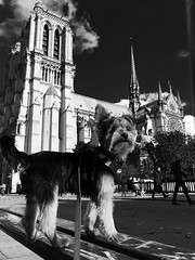 Dog is a guide to the realm of the dead, it is also a keeper of the boundary between the two worlds. Like the great mastiff of Charon, it guards the entrance way and none can pass without its acquiescence. (bernawy hugues kossi huo) Tags: faith faithful dog symbolic spiritual instinct nature underworld supernature death danger relationship thought dream faithfulness messenger paris notredame cathedral gothic animal consciously event human being ressurection companion