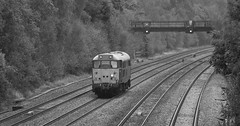 DCR Class 31/4 no 31452 trundles light engine past Tupton on 11-10-2016 with a move from Leicester to Grosmont (kevaruka) Tags: tuptonbridge tupton derbyshire countryside grim dull drearyday rainyday rain england brush britishrail networkrail bw blackwhite contrast composition locomotive class31 150 dmu trees railway trains train transport canon canoneos5dmk3 canon5dmk3 canonef100400f4556l 5d3 5diii 5d 5dmk3 boobs milf sexy wife girlfriend lol 31452