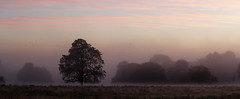 England. (richard.mcmanus.) Tags: england sunrise richmondpark london trees landscape fog mist mcmanus panorama gettyimages
