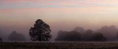 England. (richard.mcmanus.) Tags: england sunrise richmondpark london trees landscape fog mist mcmanus panorama gettyimages