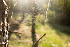 Spider's web , #Dramatic , #Photographer , #abstract , #Closeup , #bokeh , #macro , #Upclose , #mothernature , #delicate , #Spring , #beautiful , #enchanting , #Insect , #photoart , #spider , #wanderlust , #forrest , #woods , #perspective , #photographer (jwzw@ymail.com) Tags: spiders web dramatic photographer abstract closeup bokeh macro upclose mothernature delicate spring beautiful enchanting insect photoart spider wanderlust forrest woods perspective exposure outdoor contrast photography nature wonder tree color light composition