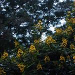 doi suthep flora thumbnail