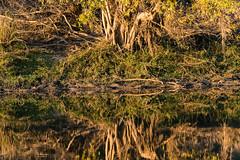 20160825_ZambeziReflectionsLandscapes_MCM-6 (mcmessner) Tags: abstract africa bjadventures morning morningboatride reflection rorschak southafrica2016 sunrise tongabezilodge zambeziriver zambia livinstone