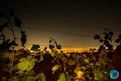 IMG_5922 (billyE1973) Tags: nacht sterne milchstrase langenlois