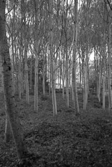 In the jungle (Blitzwuerfel (flash cube)) Tags: burgundy werracamera tessar2850