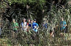 Hallwilerseelauf: Halbmarathon hinter einem Schilfvorhang