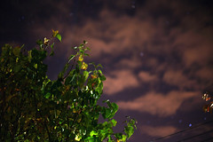You Were Nothing Special 'til You Turned Out the Light (7) (Mrs.Black&White) Tags: night stars nightgarden garden dark leaves trees cosmic canon5d