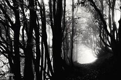 la nebbia (Massimo Luca Carradori) Tags: montagna appenninopistoiese pistoia massimolucacarradori massimoluca nebbia fog luci light lights autunno autumn