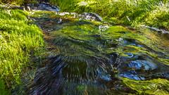 20160811_135508-1 (Andre56154) Tags: schweden sweden sverige wasser water bach flus river stream pflanze