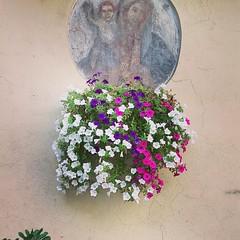 Flowerly Icon (PhoebeZu) Tags: flowers icon religion holymary viterbo beautiful purple white violet urbangarden plant