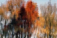 Romance (De Rode Olifant) Tags: marjansmeijsters romance autumnromance naturethroughthelens ngc brilliant npc