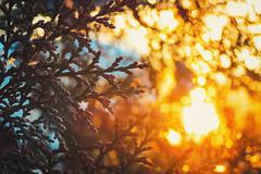 Good morning! (Still.Loony) Tags: snow morning sunrise dawn light macro snowflake bokeh dof