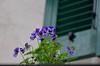 Valloria (109) (Pier Romano) Tags: valloria porte porta dipinta dipinte door doors painted imperia liguria italia italy nikon d5100 paese town dolcedo artisti pittori
