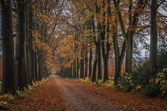 ltr-4034 (KazzT2012) Tags: canoneos70d chilterns wendover trees autumn landscape thechilterns