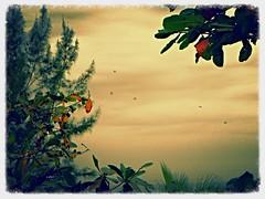 Vegetação (o.dirce) Tags: vegetação nature natureza plantas odirce riodejaneiro