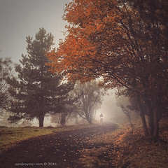 Colors of Autumn - Lights in the fog (Sandro Vinci) Tags: nikon sandrovinci photographer ph photoshop lightroom fx dx lens photo amazing cool scene google flickr maps mappa ricerca sandro vinci landscape paesaggio sicilia sicily italia italy nazione terra land territorio heart cuore passione picture ambiente atmosfera colori colorsnatura naturalmente flora piante verde leaf foglie alberi tree trees albero clima nature etna vulcano volcano potenza boato boom boati earth madreterra power fire fuoco hard motion lapilli red rocks parco unesco bene explosion pietre pietra acceso
