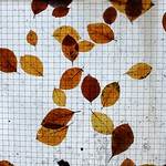 Leaves on Lean-to Roof thumbnail