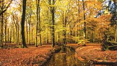 Autumn colors ... (Alex Verweij) Tags: autumn herfst kleur color colors kleuren tree trees boom bomen water sfeer canon 5d markiii alexverweij
