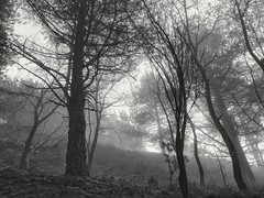 Misty atmosphere (fabioscrima) Tags: blackwhite black white nature trees fog winter autumn conceit background landscape composition leafs street