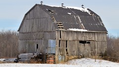 Abandoned unpainted wood barn in winter - Caledon, Ontario. (edk7) Tags: nikond3200 sigma50500mm1463apodghsmex edk7 2014 canada ontario caledon farm old abandoned derelict unpainted weatheredwood wood barn winter snow stubble tree woodlot sky landscape country countryside field rural gambrelroofline architecture building oldstructure