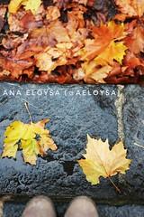 Otoo (Ana Eloysa) Tags: otoo marron amarillo naranja colorescalidos roca piedra suelo lluvia mojado aeloysa anaeloysa monasterio veruela monasteriodeveruela hojas hojassecas