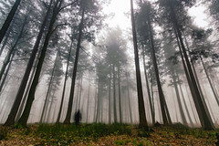 Ghost in the fog. A forest scene. (stray_light_rays) Tags: green orange trees scenics forestphotography forest woods treetrunk ghost 365 landscape wideangle no people tranquility nobody dark atmospheric moody mystical mystic mist fog day outdoors nature beautyinnature