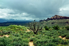 Arches National Park - Moab, Utah (mikebanders) Tags: utah storm arches national park moab crow rain snow peaks mountains