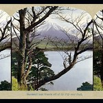 MT. FUJI THROUGH PINE BRANCHES --