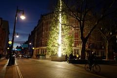The Connaught Christmas Tree 2016 by Antony Gormley (aka Jon Spence) Tags: london mayfair mountstreet connaughthotel antonygormley christmastree christmas trunk illuminated art installation light lighting bicycle londonist westernredcedar cedar carlosplace