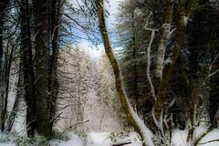 Snow in the Forest (*Capture the Moment*) Tags: 2016 berge bäume clouds farbdominanz gurnigel himmel lakethunersee landschaften mountains schnee schweiz sky snow sonya7m2 sonya7mii sonya7mark2 sonya7ii sonyfe2470mmf4zaoss switzerland thunersee trees wetter wolken blau blue