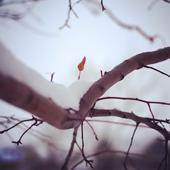 98/365 Winter has arrived (fotovivo / peevish me) Tags: 365 postaphotoaday snow branches lateautumn square fotovivo leaf