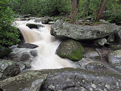 IMGPG15628 - Great Smoky Mountains National Park (David L. Black) Tags: nationalparks greatsmokymountainsnationalpark