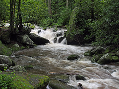 IMGPG15633 - Great Smoky Mountains National Park - Roaring Fork (David L. Black) Tags: nationalparks greatsmokymountainsnationalpark