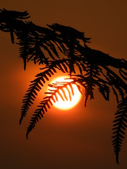 the end of a hot day (rospix) Tags: uk light summer orange sun fern nature silhouette wales countryside july 2013 rospix