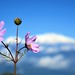 Pure Nature........... Autumn Bloom in High Himalayas [Explored]